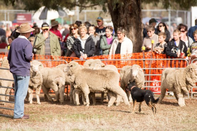 2014 Sheep Dog Trials
